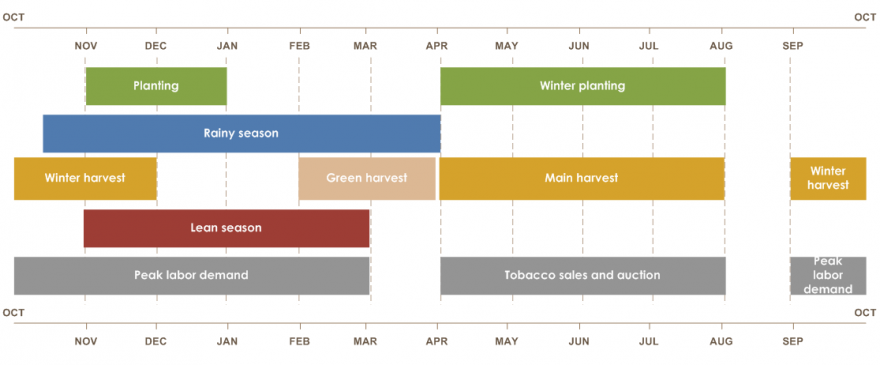Malawi seasonal calendar  Rainy season is from mid-October until April. Planting is from November until January. Winter planting is from April to August. Green harvest is from February to April. Main harvest is from April until August. Winter harvest is from September until December. Lean season is from November until March. Peak labor demand is from September until March. Tobacco sales and auction is from April until August.