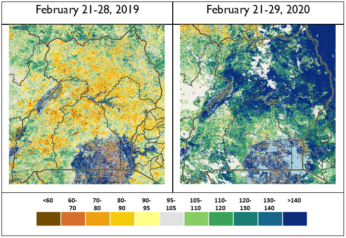 Two maps of Uganda comparing NDVI values in late February 2019 and in late February 2020. NDVI values in 2019 were slightly below the median in most areas. NDVI values in 2020 were significantly higher than the median in most areas.