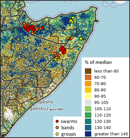 Map of Somalia showing vegetation conditions and the presence of desert locusts in late June 2020