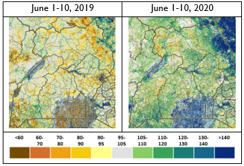 Graphic showing Normalized Difference Vegetation Index (NDVI) as a percent of median in first dekad of June 2019 and 2020