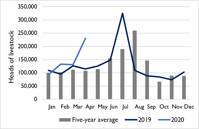 Graphic showing monthly livestock export volumes out of Bossasso port in 2019 and 2020 compared to the 2015-2019 average