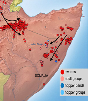 Map showing the location of desert locust swarms, groups, and bands in Somalia in late October