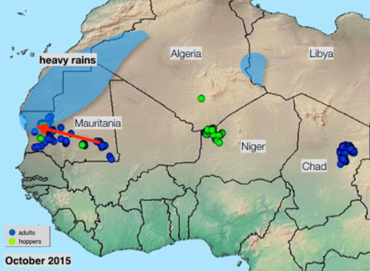 Figure 2. Desert locust sightings in West Africa in October 2015