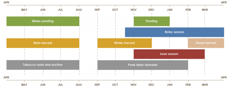 Rainy season is from mid-October until April. Planting is from November until January. Winter planting is from April to August. Green harvest is from February to April. Main harvest is from April until August. Winter harvest starts in September.