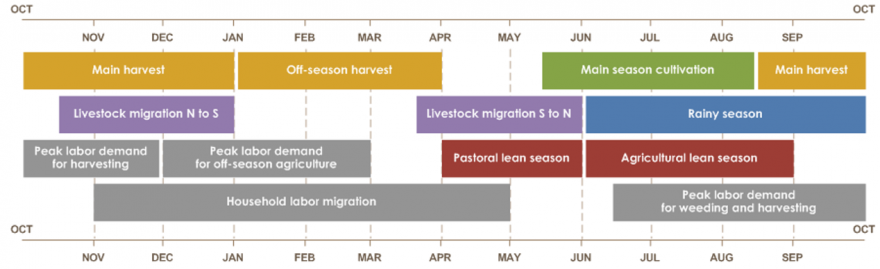 Main harvest is from mid-August until January. Off-season harvest is from January until April. Main season cultivation is from mid-May until mid-August. Livestock migration from north to south is from mid-Oct