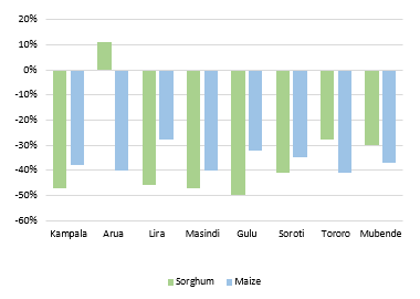 The chart shows the price of maize and sorghum in eight markets compared to the same time last year. For both cereals, prices are 20 to 50 percent below average across most markets, except in Arua, where it is 10 percent above the same time last year.