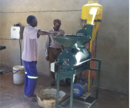Figure 3.  Hammer milling of early harvested pearl millet, Jambezi in Hwange District, mid-May 2017.